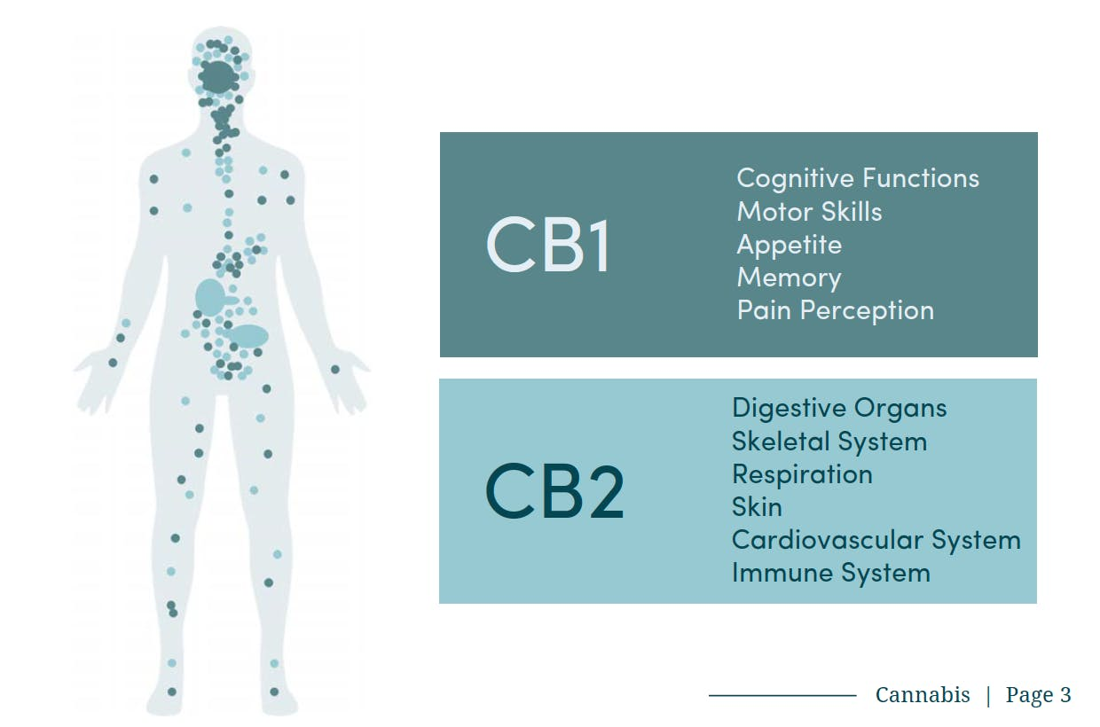 Map and purpose of the CB1 and CB2 receptors found in your body.