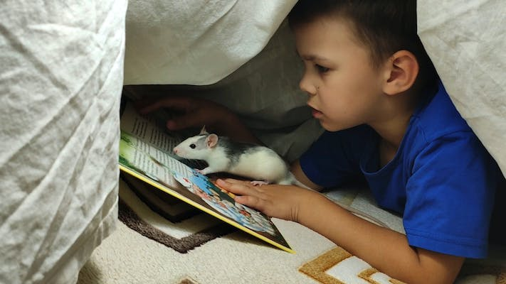boy reading to mouse under covers