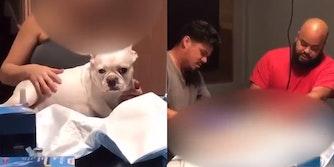 dog on table (L) men operating on dog (R)
