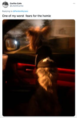 """One of my worst  fears for the homie"" night scene of a white terrier leaning out of a car window"