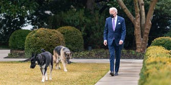 President Joe Biden walks with his dogs Major and Champ in the Rose Garden of the White House