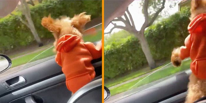 A dog in an orange hoodie riding in a car.
