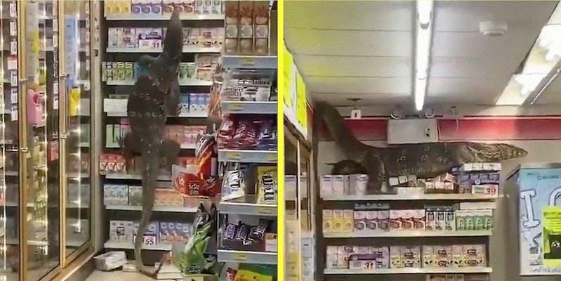 A lizard climbs up the shelf in a convenience store.