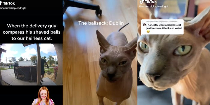 delivery_cat_hairless_ballsack