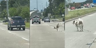 dog jumps out of moving truck