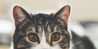 A cat's eyes.