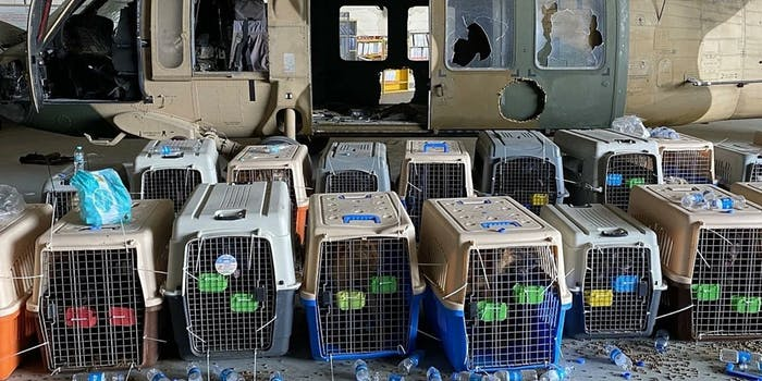 Dogs in kennels in Kabul