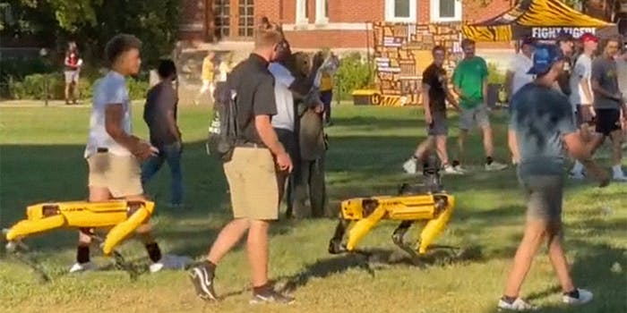 robot dogs walk with students on campus