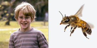 A young boy (L) and a bee (R).