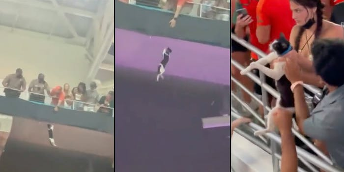 football cat miami saved with american flag viral video