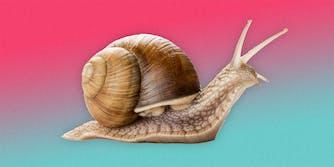 A snail.