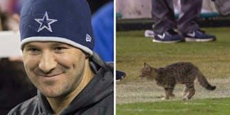 Tony Romo cat NFL