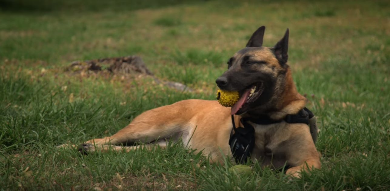 hbo war dog review