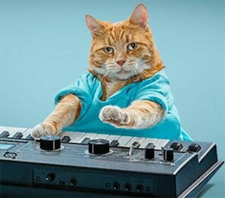 Keyboard Cat Bento