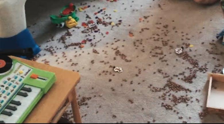 spilled cat food