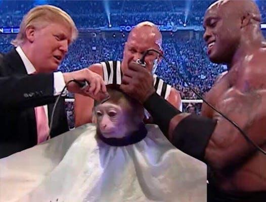 new memes 2017 : monkey getting a haircut