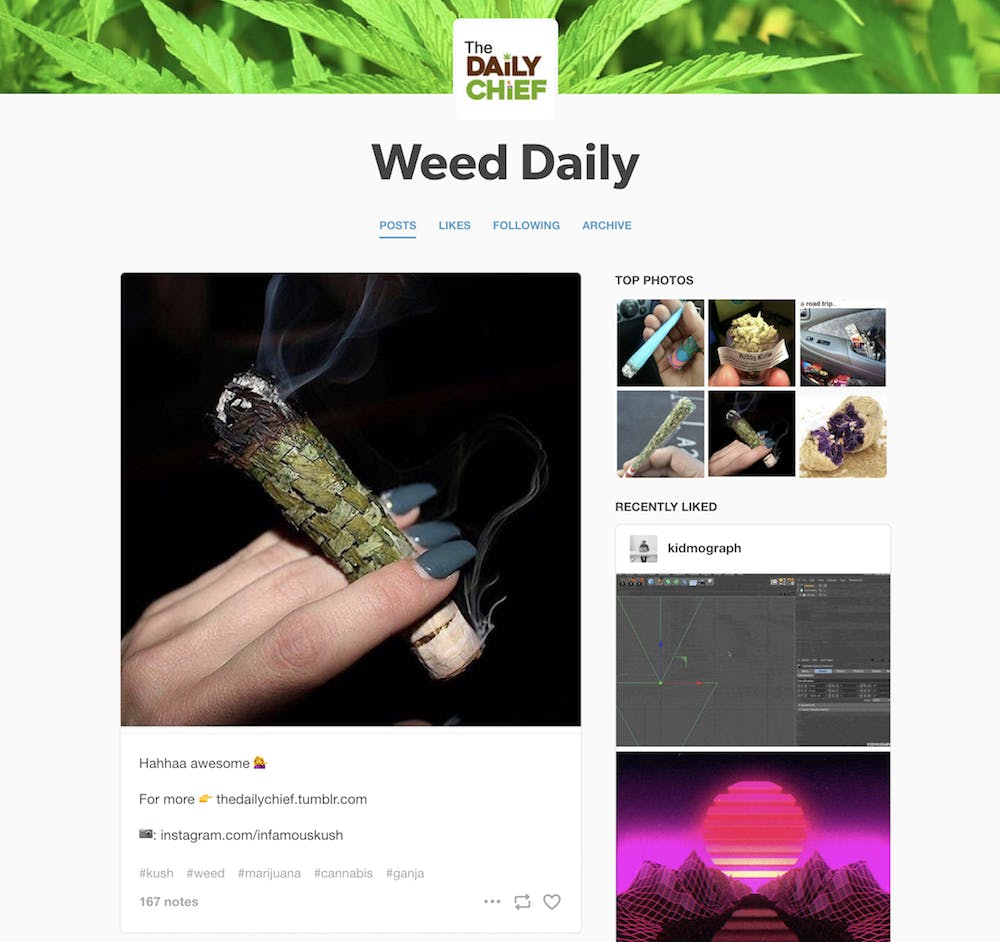 stoner blogs : daily chief