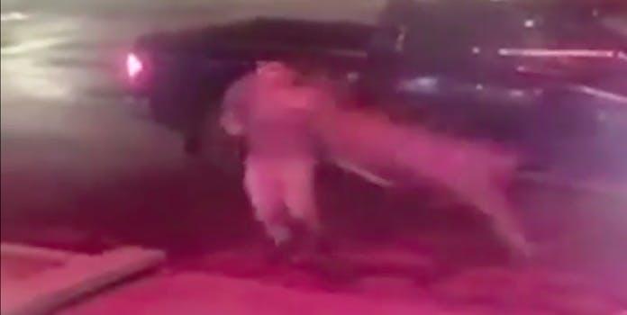 deer runs over man: deer shown running over man