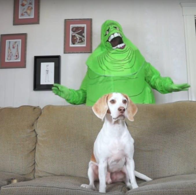 Dog vs.Slimer