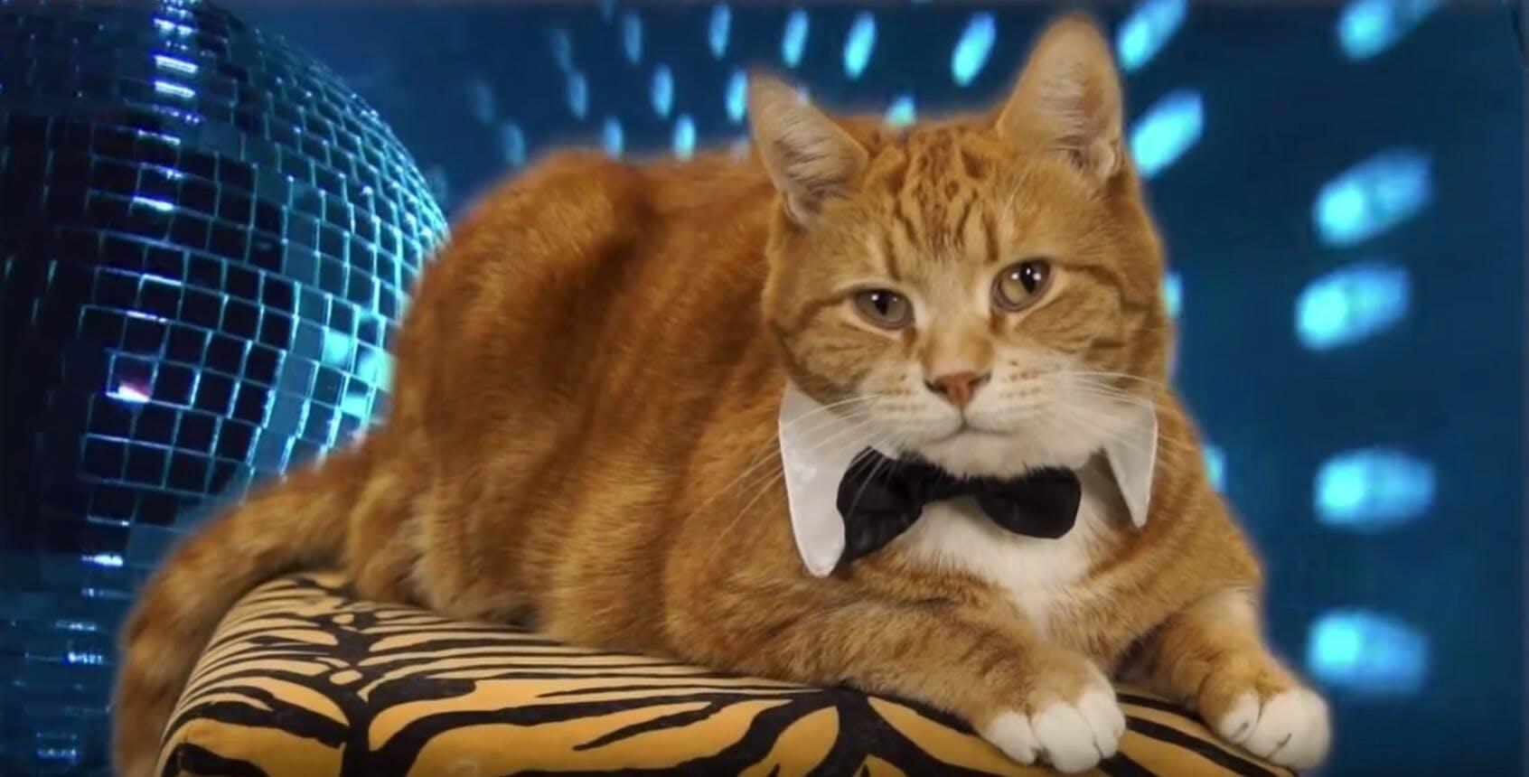 keyboard cat tribute video