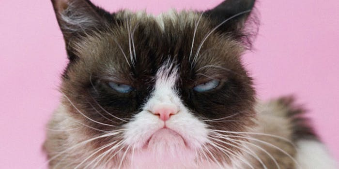 grumpy cat meme