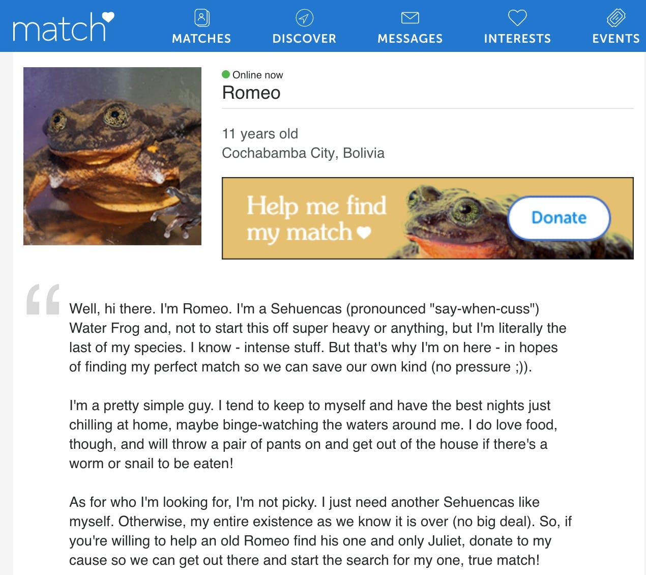 Romeo the frog's Match.com profile