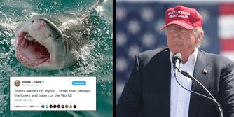 President Donald Trump reportedly told adult film actress Stormy Daniels that he is 'terrified' of sharks. He's tweeted about his shark hatred in the past.