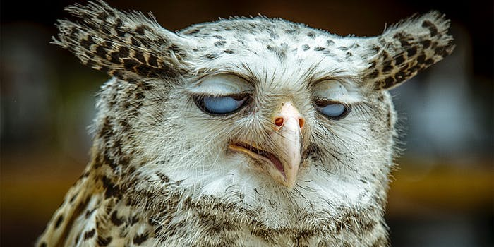 Owl with eyes crossed