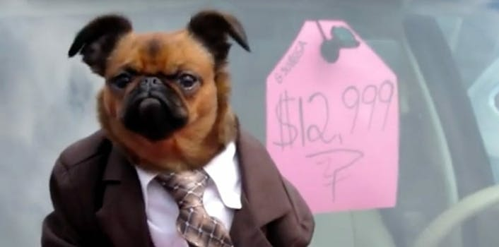 brus griffon dog used car salesman