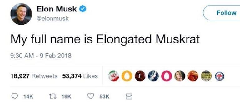elongated muskrat meme - elon musk tweet