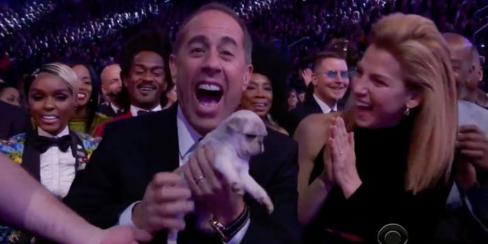 Puppies at the Grammys