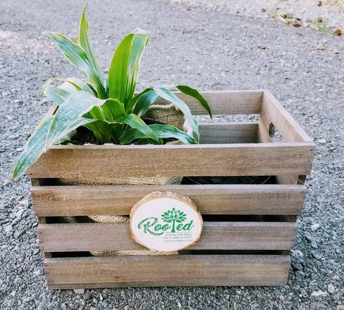 Rooted pet crate