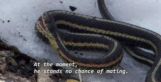 sleepy snake meme