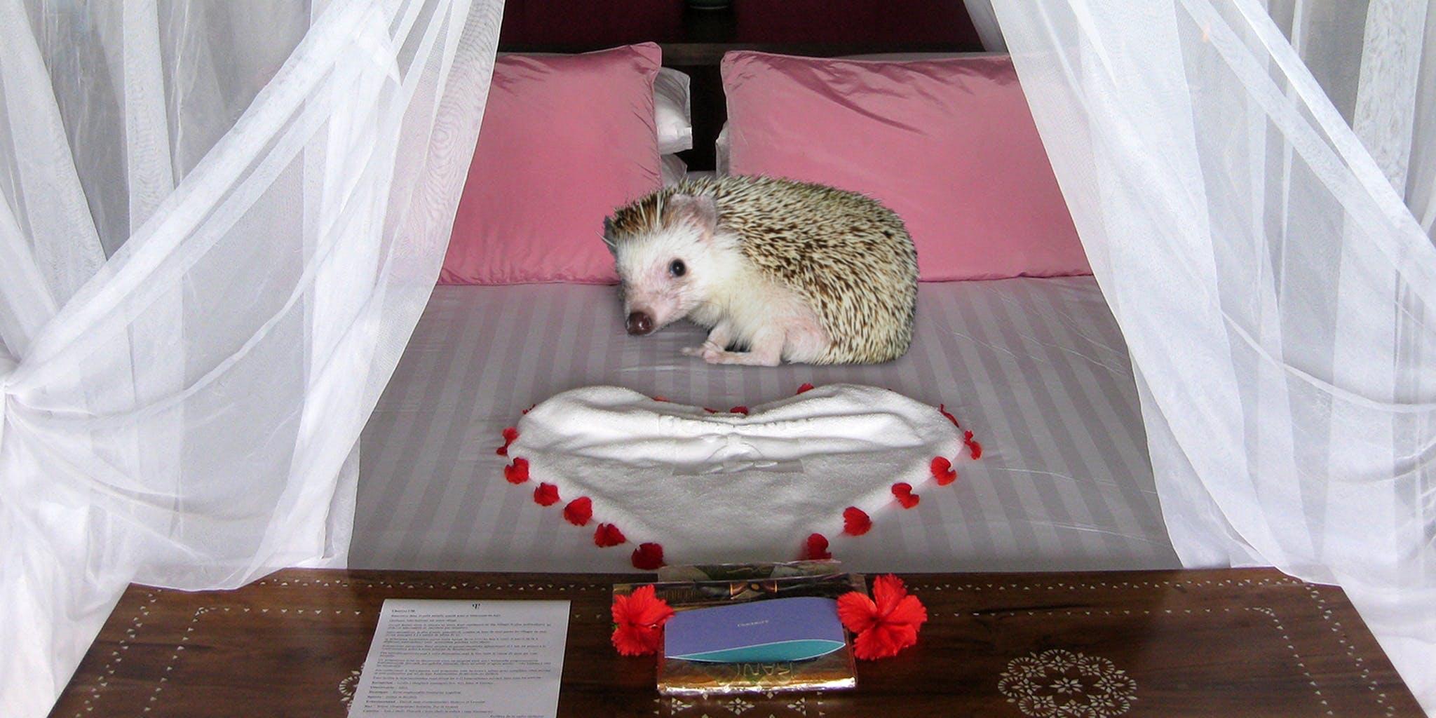 Sexy Hedgehog