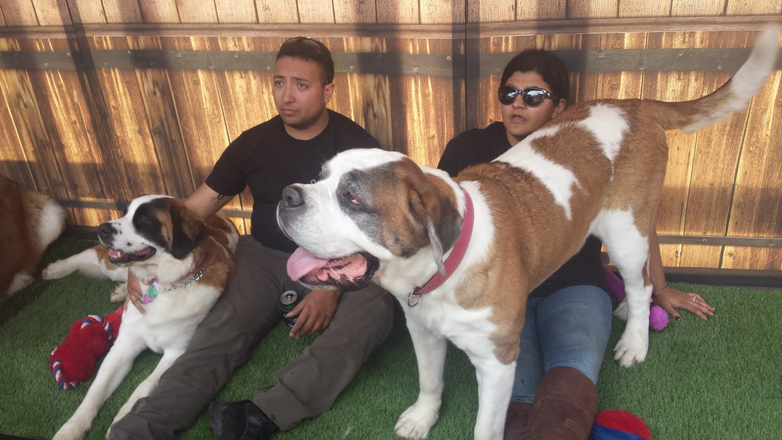The dogs mostly hung out with members of the Saint Bernard Rescue Foundation when not out on rescue missions.