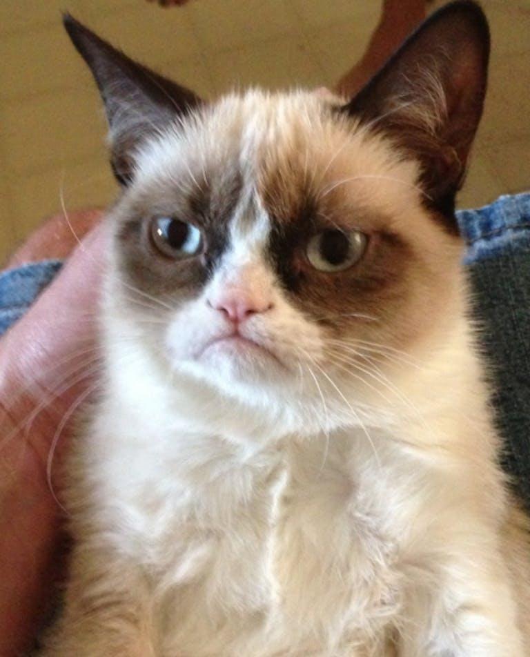 grumpy cat meme - pictures of grumpy cat