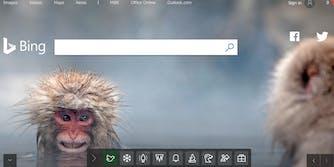 Bing homepage with snow monkeys