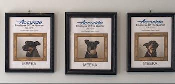 meeka dog employee of the quarter
