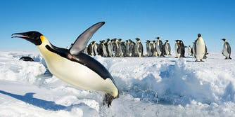Antarctic penguins with tweets from President Trump and Seth Meyers