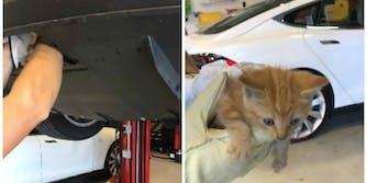 Tesla cat stuck in bumper