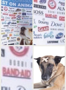 band-aid dog meme animal testing