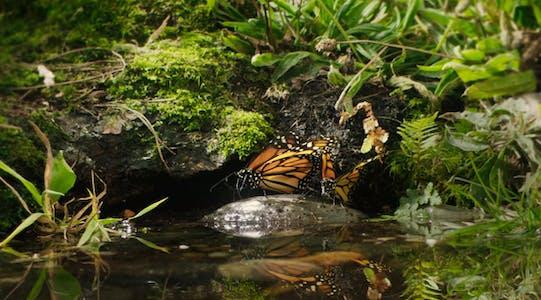 netflix nature documentaries