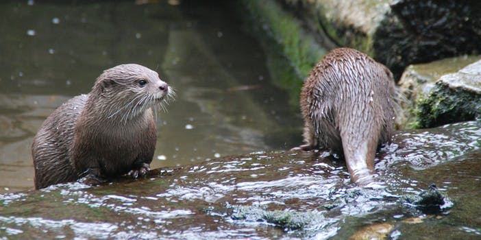 2 otters
