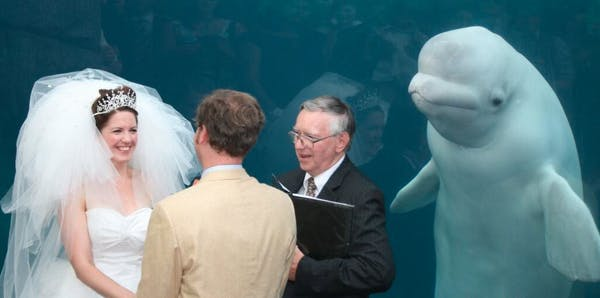 Whale at wedding