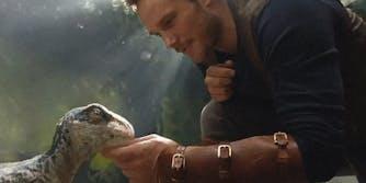 Chris Pratt petting baby velociraptor