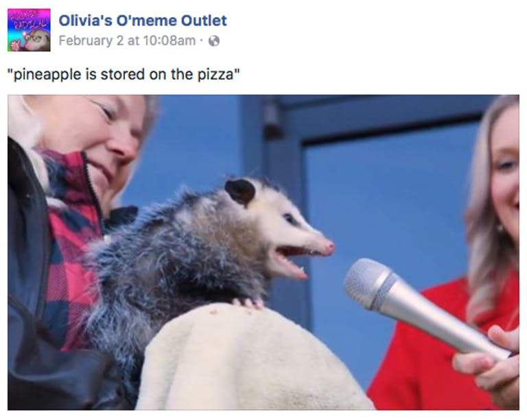 interview possum pineapple stored on pizza