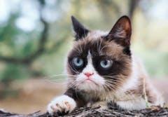 Grumpy Cat Limited won a $700,000 lawsuit.