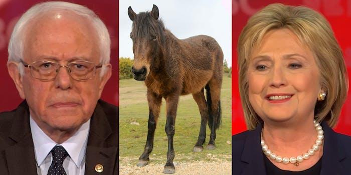 Bernie Sanders, a pony, and Hillary Clinton