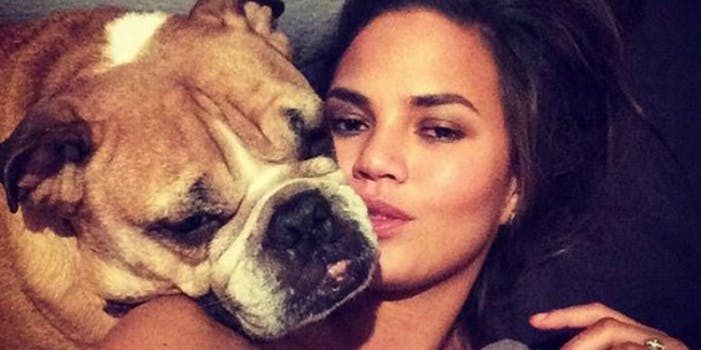 Chrissy Teigen lounges on a bed for a selfie with her English bulldog Puddy