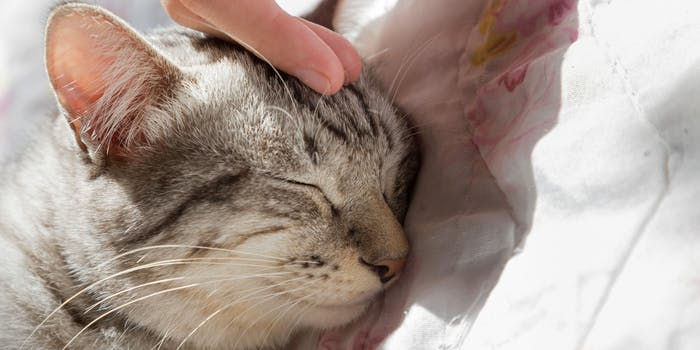 A person petting a cat